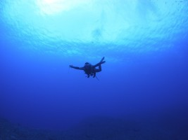 宮古島ダイビングショップ カピリナの仕事イメージ